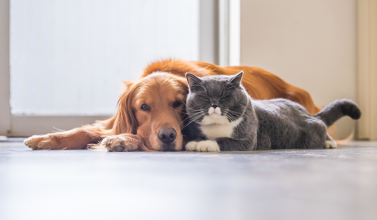 Top 5 Home Security Tips for Pet Owners